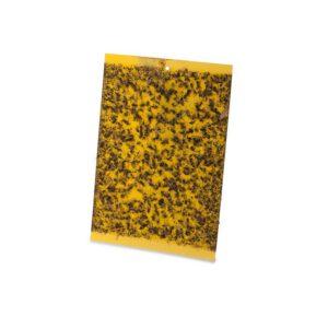 הלוחית הצהובה L