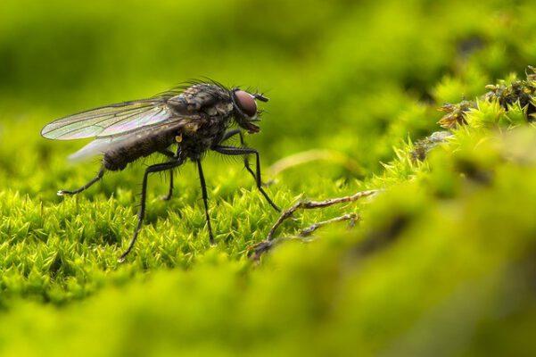 פתרון לבעיית זבובים בבית - כל מלכודות הזבובים לבית