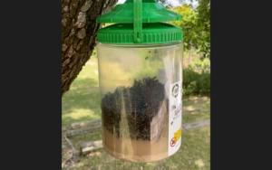 מלכודת זבובים - הטורפת הירוקה