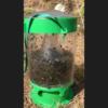 מלכודת זבובים - מיניפלצת