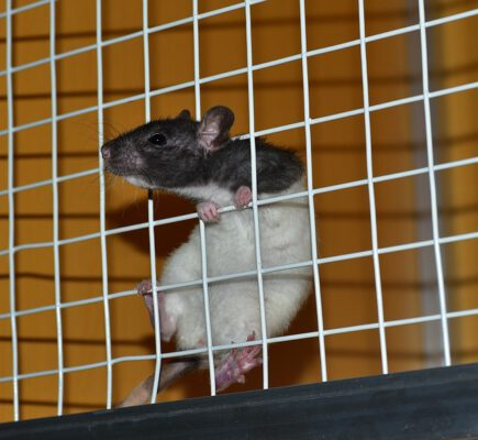 סוגי מלכודות לחולדות ועכברים - בחרו את המתאים לכם
